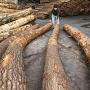 地松の原木選び